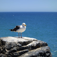 Seagull sitting above the oceon on a rock