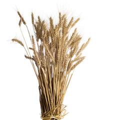 wheat on white background.