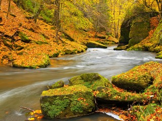 Big boulders with fallen leaves. Autumn mountain river banks.