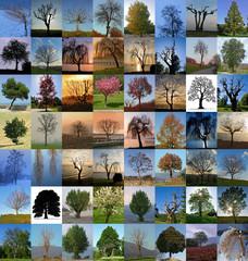 Puzzle di alberi