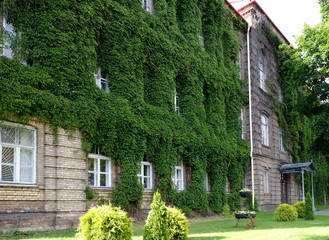 old building of the University overgrown with ivy