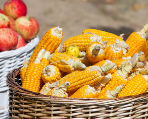 ripe corn and apples in baskets