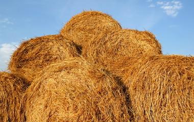 Bales of straw close-up