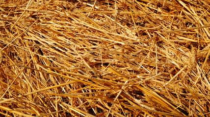 Texture of rye straw