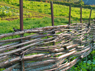 Wicker fence of curved wooden twigs