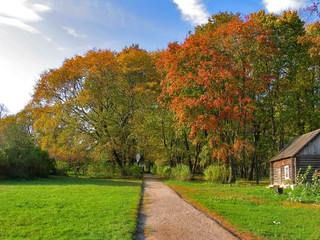 Autumn landscape in a sunny day