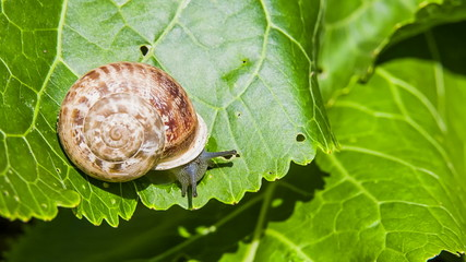 Snail Eats Green Leaf
