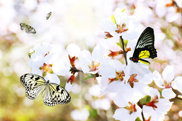 Blooming spring twigs and butterflies
