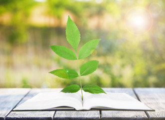 Open book with plant on table outdoors