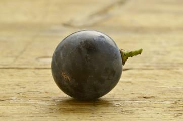 Traubenlese Vendemmia Harvest Vendange Vendimia wine