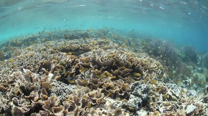Yellow Fish and Coral Reef
