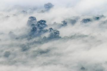 The fog covered the forest at Pha Mo I Daeng Cliff