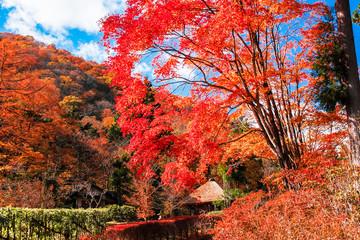 山里の紅葉
