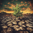 Leinwanddruck Bild - last hope, abstract environmental backgrounds with alone tree in