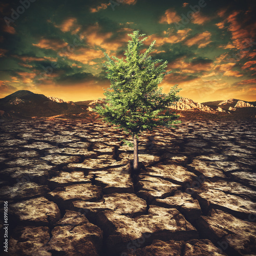 Leinwanddruck Bild last hope, abstract environmental backgrounds with alone tree in