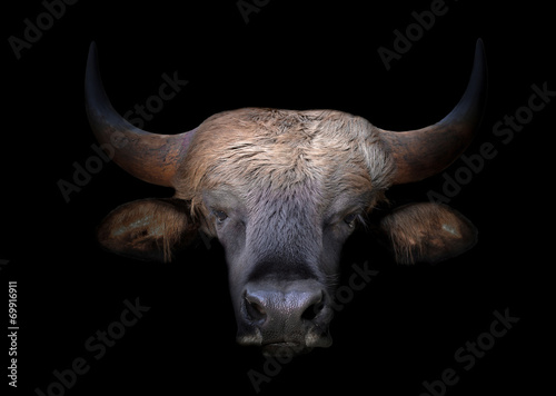Deurstickers Bison gaur head in the dark