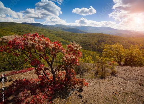Fotobehang Marokko Autumn beautiful forest