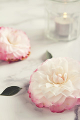Camellia flower background with candle