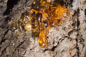 tree natural amber resin