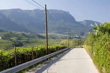 Strasse in Weinberg in Südtirol
