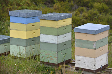 beehives in nature