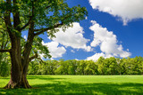Green city park with trees. Beautiful summer landscape