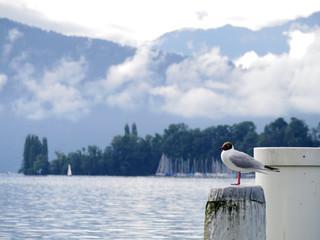 Gull on white pole at lake