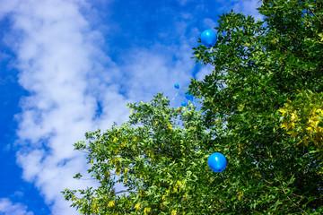 Воздушные шары летят в небо