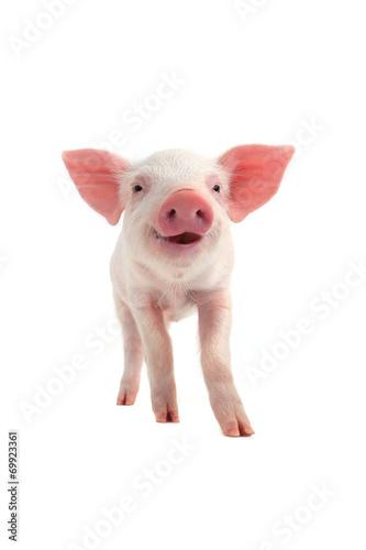 smile pig - 69923361