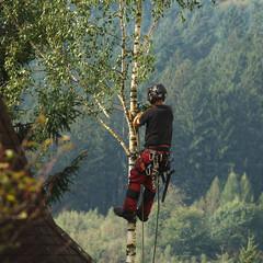 élagueur en action sur l'arbre