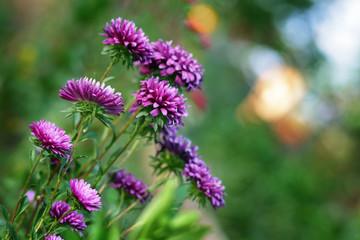 Freshness flowers