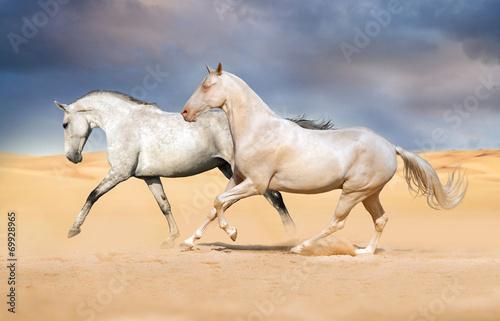 Group of horse run on desert