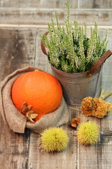 Herbstzeit / Kürbiszeit