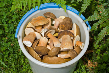 Bucket with mushrooms 9