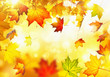 Autumn leaves - 69932311