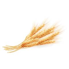 Wheat ears isolated on white background. EPS 10