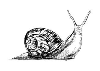 Hand drawing a snail. Vector illustration