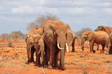 Red Elefants
