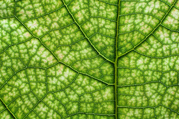 Abstract closeup of a leaf