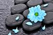 Margerytka na kamieniach bazaltowych