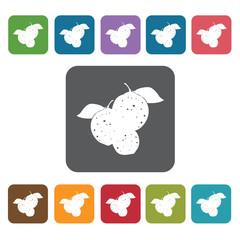 Kalamansi sign icon symbol set. Tropical fruits set. Rectangle c