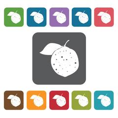 Caimito sign icon symbol set. Tropical fruits set. Rectangle col