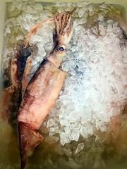 Fresh squid onto the ice