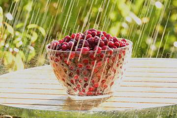 Кизил и летний дождь