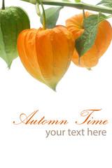 Automn Time
