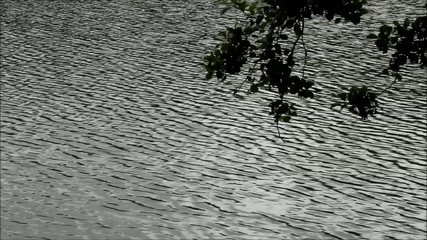 Lake, rippling water by the wind
