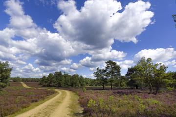Weg durch die Lünenburger Heide