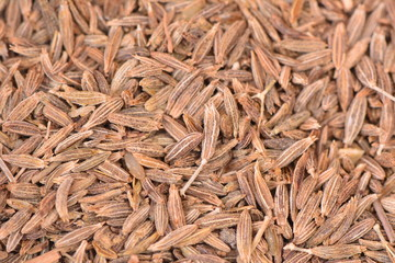 Cumin spices