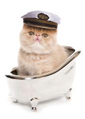 bath time exotic kitten