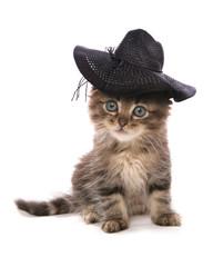 asian kitten sitting